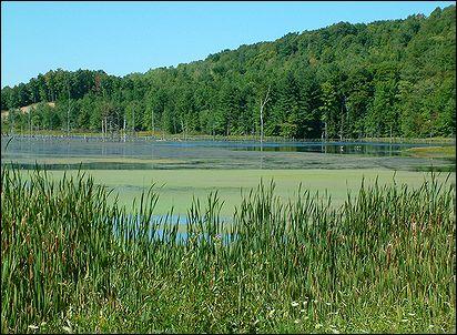 Cabic Pond Summer 2007