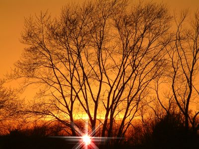 Orange Sky Supreme - Sunset out my office window